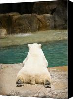 Zoo Canvas Prints - Playful Polar Bear Canvas Print by Adam Romanowicz