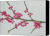 Flora Drawings Canvas Prints - Plum Blossom Canvas Print by Glenda Zuckerman