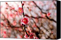 Herald Canvas Prints - Plum Blossoms Canvas Print by Dean Harte