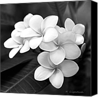 White Flowers Canvas Prints - Plumeria - Black and White Canvas Print by Kerri Ligatich