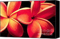 Plumeria Canvas Prints - Plumeria Flowers Canvas Print by Paul Topp