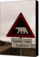 Polar Bear Canvas Prints - Polar Bear Crossing Sign In Svalbard Canvas Print by Norbert Rosing