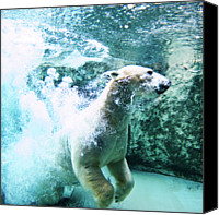 Polar Bear Canvas Prints - Polar Bear Canvas Print by Japanese amateur photog