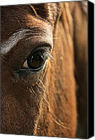 Filly Canvas Prints - Pool Of Trust Canvas Print by Odd Jeppesen