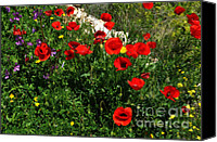 Wild Geranium Canvas Prints - Poppies Canvas Print by Mary Machare