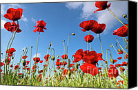 Blossom Canvas Prints - Poppies Season Canvas Print by Evgeni Dinev