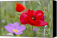 Poppy Petals Canvas Prints - Poppy 2 Canvas Print by Sophie De Roumanie