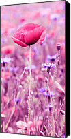 Poppy Digital Art Canvas Prints - Poppy Canvas Print by Falko Follert