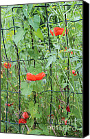 Kim Bird Canvas Prints - Poppy Fence Canvas Print by Kim Bird
