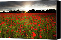 Flower Photo Canvas Prints - Poppy Field At Sunset Canvas Print by Doug Chinnery