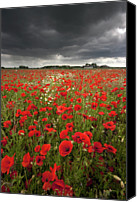 Storm Photo Canvas Prints - Poppy Field With Stormy Sky In Background Canvas Print by Chris Conway