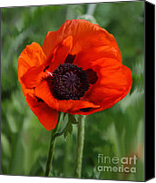 Poppy Petals Canvas Prints - Poppy Garden Canvas Print by Diane E Berry