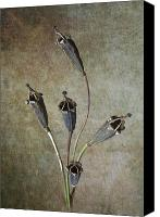 Digital Prints Pyrography Canvas Prints - Poppy Seed Cases Canvas Print by Debra Kelday