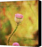 Poppy Digital Art Canvas Prints - Poppy Seed Pod Canvas Print by Cathie Tyler