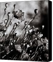 Canada Photographers Prints Canvas Prints - Poppy To Grey Canvas Print by Jerry Cordeiro