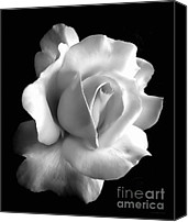 White Rose Canvas Prints - Porcelain Rose Flower Black and White Canvas Print by Jennie Marie Schell