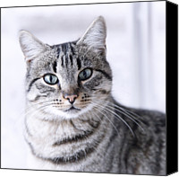 Animal Portrait Canvas Prints - Portrait Gray Tabby Cat Canvas Print by Maika 777