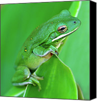 Canna Canvas Prints - Portrait In Green Canvas Print by Jeff R Clow