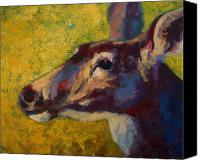 Buck Canvas Prints - Portrait Of A Doe Canvas Print by Marion Rose