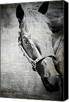 Horse Photographs Canvas Prints - Portrait Of A Horse Series III Bele Canvas Print by Kathy Jennings