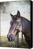 Horse Photographs Canvas Prints - Portrait Of A Horse Series V Canvas Print by Kathy Jennings