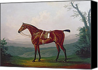 Horse Standing Canvas Prints - Portrait of a Race Horse Canvas Print by Daniel Clowes
