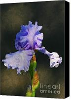 Steve Augustin Canvas Prints - Portrait of an Iris Canvas Print by Steve Augustin