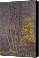 Autumn Photographs Canvas Prints - Portrait of Autumn Canvas Print by Rob Travis