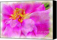 Judi Bagwell Canvas Prints - Portulaca with Texture Canvas Print by Judi Bagwell
