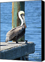 Pelicans Canvas Prints - Posing Pelican Canvas Print by Carol Groenen