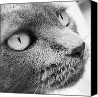 Featured Canvas Prints - Pout Canvas Print by Cameron Bentley