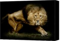 Lion Digital Art Canvas Prints - Power Canvas Print by Animus  Photography