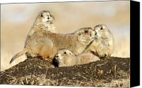 Prairie Dog Photo Canvas Prints - Prairie Dog Family Portrait Canvas Print by Larry Ricker