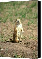 Prairie Dog Photo Canvas Prints - Prairie Dog Canvas Print by John Burk