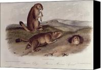 1842 Canvas Prints - Prairie Dog Canvas Print by John James Audubon