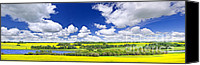Prairie Canvas Prints - Prairie panorama in Saskatchewan Canvas Print by Elena Elisseeva