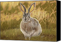 Rabbit Pastels Canvas Prints - Prairie Rabbit Canvas Print by Evelyn Butler