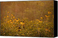 Goose Canvas Prints - Prairie Wildflowers Canvas Print by Steve Gadomski