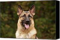 Alsatian Canvas Prints - Pretty Girl Canvas Print by Sandy Keeton