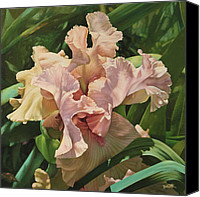 Photo-realism Canvas Prints - Pretty in Pink Iris Canvas Print by Susan Buczak