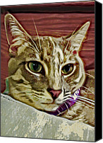 Animals Canvas Prints - Pretty Kitty Canvas Print by David G Paul