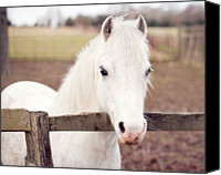 Wooden Post Canvas Prints - Pretty White Pony Looking Over Fence Canvas Print by Sharon Vos-Arnold