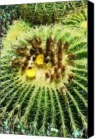 Justin Hiatt Canvas Prints - Prickly Floral  Canvas Print by Justin Hiatt
