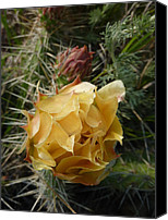 Estephy Sabin Figueroa Photo Canvas Prints - Prickly Pear Blossom 1 Canvas Print by Estephy Sabin Figueroa