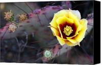 Big Bend Canvas Prints - Prickly Pear Canvas Print by Eric Foltz