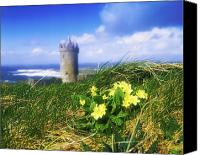 Doonagore Tower Canvas Prints - Primrose Flower In Foreground Canvas Print by The Irish Image Collection