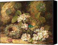 Signed Painting Canvas Prints - Primroses and Birds Nests on a Mossy Bank Canvas Print by Oliver Clare