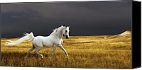 Prairie Photography Canvas Prints - Prince of the Plains Canvas Print by Ron  McGinnis