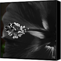 Barbara Middleton Canvas Prints - Projection in Black and Whiite Canvas Print by Barbara Middleton