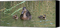 Wild Pyrography Canvas Prints - Proud Mom Duck Canvas Print by Valia Bradshaw